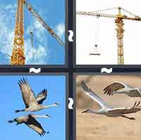 The answer is: Crane