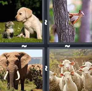 Level 344 4 pics 1 word answers 4 pics 1 word level 344 expocarfo Images