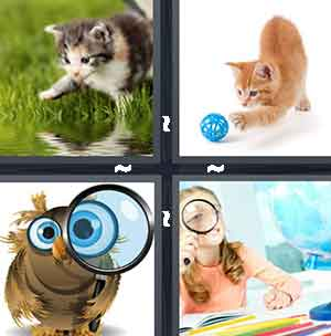 4 pics 1 word owl roulette