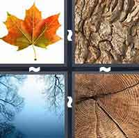 4 Pics 1 Word level 4-11 4 Letters