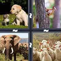 4 Pics 1 Word level 4-2 6 Letters