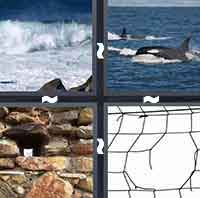 4 Pics 1 Word level 4-14 6 Letters