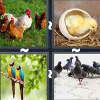 4 Pics 1 Word level 511