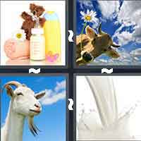 4 Pics 1 Word level 517