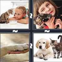 4 Pics 1 Word level 4-4 3 Letters