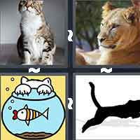 4 Pics 1 Word level 698