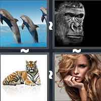4 Pics 1 Word level 799