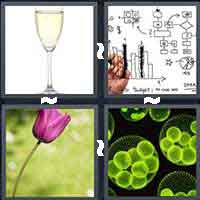 4 Pics 1 Word level 16-3 4 Letters
