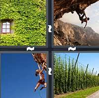 4 Pics 1 Word level 1203