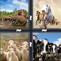 4 Pics 1 Word level 1304