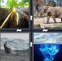 4 Pics 1 Word level 1313