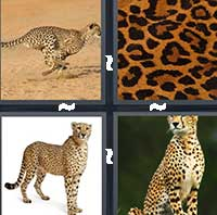 4 Pics 1 Word level 16-15 7 Letters