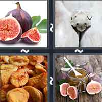 4 Pics 1 Word level 10-4 3 Letters