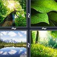 4 Pics 1 Word level 2099