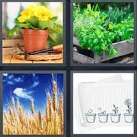 4 Pics 1 Word level 2426