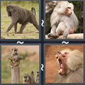4 Pics 1 Word level 2437