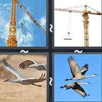 4 Pics 1 Word level 2518