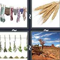 4 Pics 1 Word level 12-3 3 Letters
