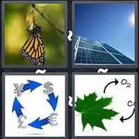 4 Pics 1 Word level 3106
