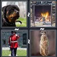 4 Pics 1 Word level 3203