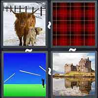 4 Pics 1 Word level 25-6 8 Letters