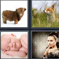 4 Pics 1 Word level 15-13 3 Letters