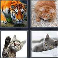 4 Pics 1 Word level 16-5 3 Letters