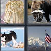 4 Pics 1 Word level 3513
