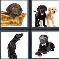 4 Pics 1 Word level 27-3 8 Letters