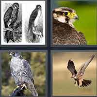 4 Pics 1 Word level 3520